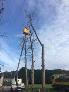Élagage d'un arbre avec une nacelle à Bayonne
