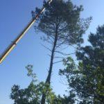 Retrait d'un pin à l'aide d'une grue