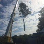 Retrait d'un pin à l'aide d'une grue (2)