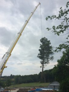 Retrait d'un pin à l'aide d'une grue (4)