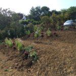 Aménagement des espaces verts et talus