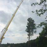 Abattage d'un arbre et retrait avec une grue à Bayonne