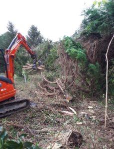 Abattage et arrachage du tronc et branches