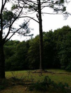 L'élagueur grimpeur en train d'ébrancher l'arbre