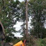 Démontage d'un arbre à Bayonne