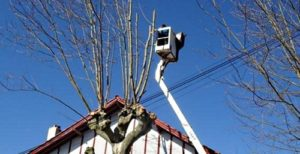 Élagage avec nacelle, près des câbles électriques Bayonne