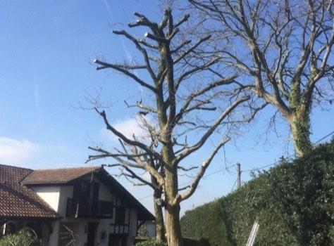 Élagage de grands et petits arbres
