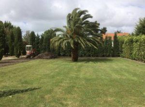 Plantations pour les jardins