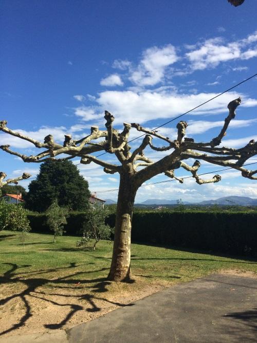 Taille d'arbre près d'Arcangues