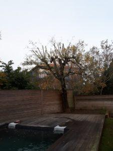 Elagage d'un arbre de Saint Jean de Luz