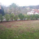Plantation d'une haie de laurier derrière Biarritz
